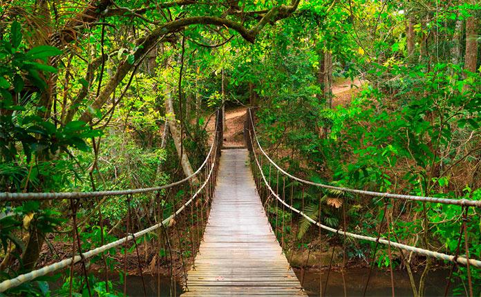 Парк Кхао Яй фото