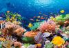 Большой Барьерный Риф в Австралии